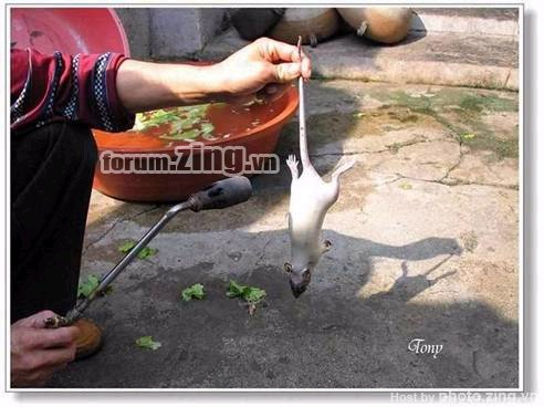 Description: http://images1.afamily.channelvn.net/Images/Uploaded/Share/2009/09/22/chuot1.jpg