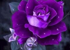 purplr-flowers-02